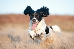 Dog Training Glasgow