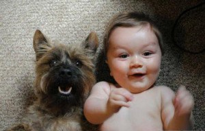 dogs-and-newborns