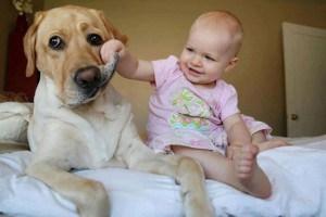 dog-newborn-baby-2