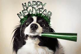 newyearsresolutions-dog