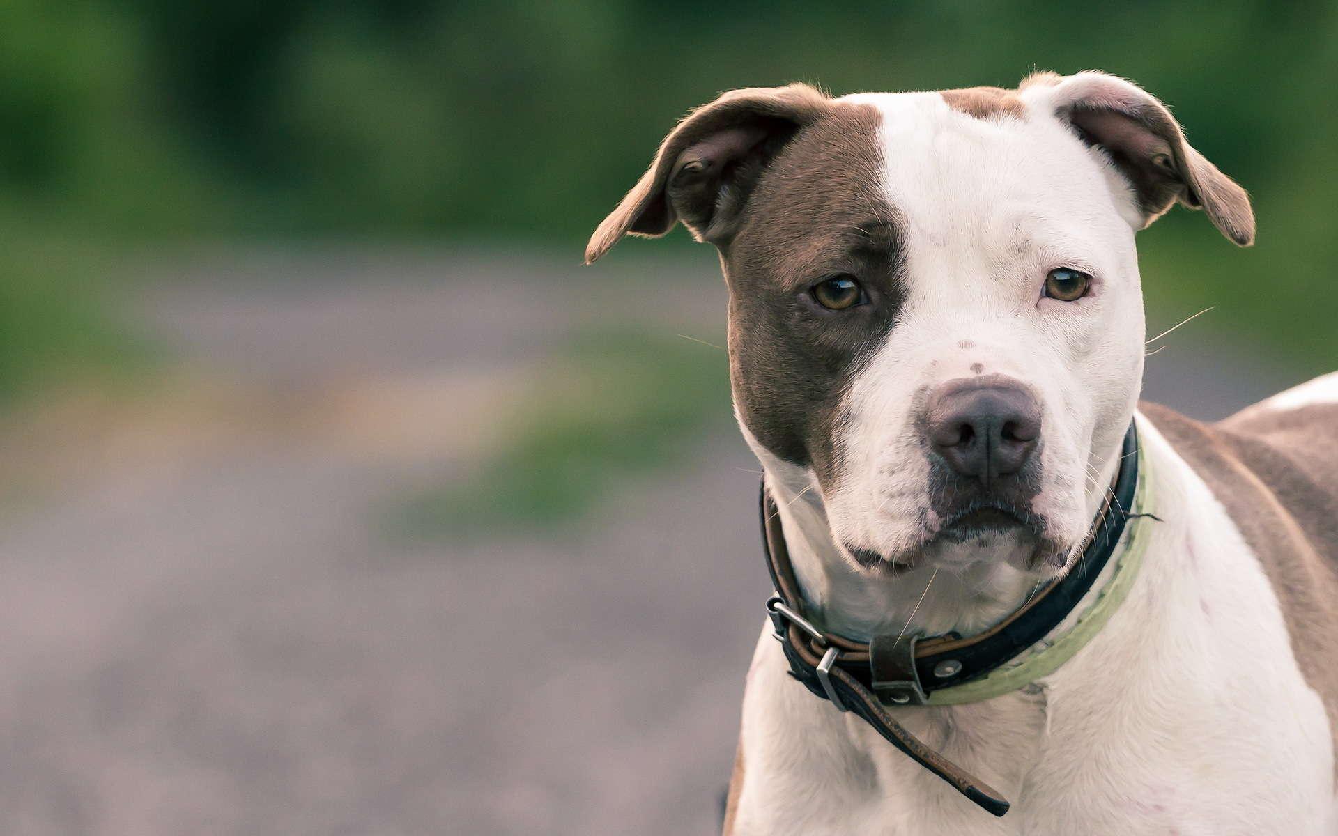 Dog Rescue Blog Uk